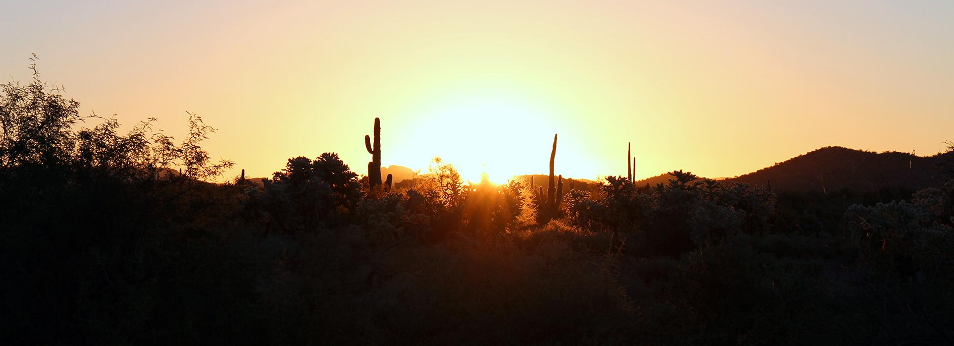 Gold Canyon AZ